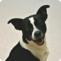 Adopt A Pet :: Sunshine - Lufkin, TX