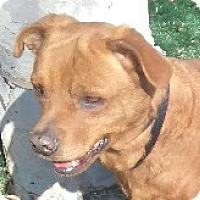 Adopt A Pet :: Davy - Chula Vista, CA