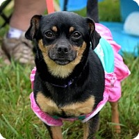 Adopt A Pet :: Coco (ETAA) - Plainfield, CT
