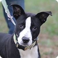 Adopt A Pet :: Piper Chapman~adopted! - Glastonbury, CT