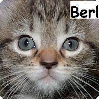 Adopt A Pet :: Berlioz - Herndon, VA