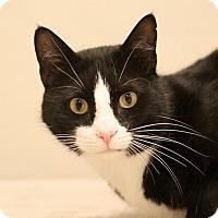 Adopt A Pet :: Stan - Aiken, SC