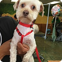 Adopt A Pet :: Gilbert - Thousand Oaks, CA