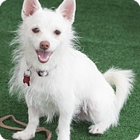 Adopt A Pet :: Taffy - San Diego, CA