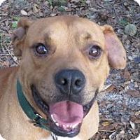 Adopt A Pet :: Loverboy Gus! - St Petersburg, FL