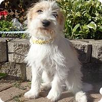 Adopt A Pet :: Jerett - West Chicago, IL