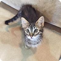 Adopt A Pet :: Chloe - Woodland, CA