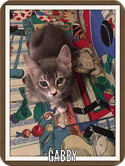 Domestic Shorthair Kitten for adoption in Tega Cay, South Carolina - Gabby