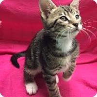 Adopt A Pet :: Merlin - Orlando, FL