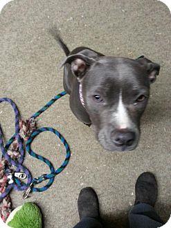 Pit Bull Terrier Dog for adoption in Custer, Washington - Jezebelle
