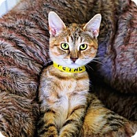 Adopt A Pet :: Petal - Markham, ON