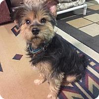 Adopt A Pet :: Benji - Grantville, PA
