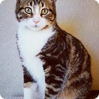 Adopt A Pet :: Nolan - Fredericksburg, TX