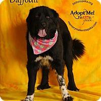 Adopt A Pet :: Daffodil - Topeka, KS