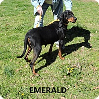 Adopt A Pet :: Emerald - Washington, GA