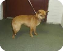 Feist Mix Dog for adoption in Dundas, Virginia - Mariah