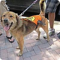 Adopt A Pet :: Kodiak - Alexandria, VA