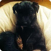 Adopt A Pet :: Jett - Saskatoon, SK