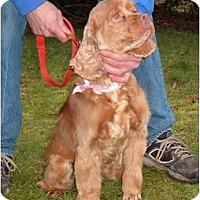 Adopt A Pet :: Maggie - Tacoma, WA