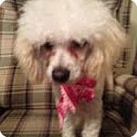 Adopt A Pet :: Sammy - pasadena, CA
