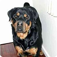 Adopt A Pet :: Zeke & Maddie - Belleville, MI