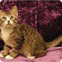 Adopt A Pet :: Charleston - Sacramento, CA