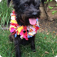Adopt A Pet :: FEDERICA - Irvine, CA