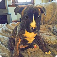 Adopt A Pet :: Allie ~ Adoption Pending - Youngstown, OH