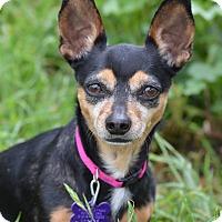 Adopt A Pet :: Pixie - Wimberley, TX