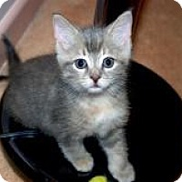 Adopt A Pet :: Charon - Sunderland, ON