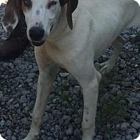 Adopt A Pet :: COOPER - Cadiz, OH