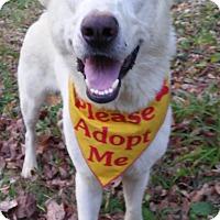 Adopt A Pet :: Raymond - Louisville, KY
