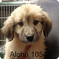 Adopt A Pet :: Aloha - baltimore, MD