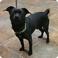 Adopt A Pet :: Snickerdoodle - Lisbon, OH