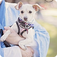 Adopt A Pet :: Ivy - Kingwood, TX