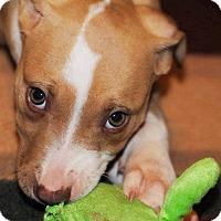 Adopt A Pet :: Hope - Lawrenceville, GA