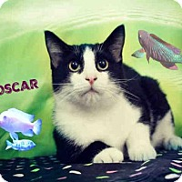 Adopt A Pet :: *OSCAR - Sugar Land, TX