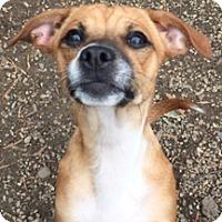 Adopt A Pet :: Evie - Patterson, CA