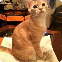 Adopt A Pet :: Rascal - Houston, TX