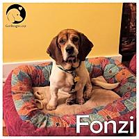 Adopt A Pet :: Fonzi - Pittsburgh, PA