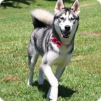 Adopt A Pet :: Elsa - Glastonbury, CT