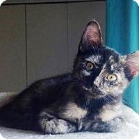 Adopt A Pet :: Blackie - Orange, CA