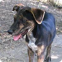 Adopt A Pet :: Jones - Godley, TX