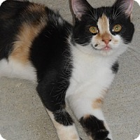 Adopt A Pet :: Calica - North Highlands, CA