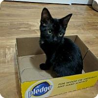 Adopt A Pet :: Boo - San Jose, CA