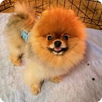 Adopt A Pet :: Huggs - conroe, TX