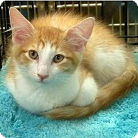 Adopt A Pet :: Theodore - Hallandale, FL