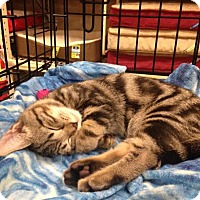 Adopt A Pet :: Boone - Ephrata, PA