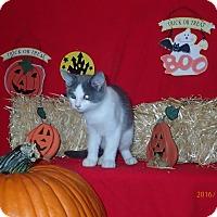 Adopt A Pet :: Artemis - Lancaster, CA