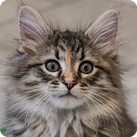 Adopt A Pet :: Karen - St. Paul, MN
